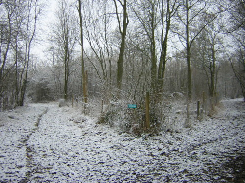Shadwell Wood in the Snow