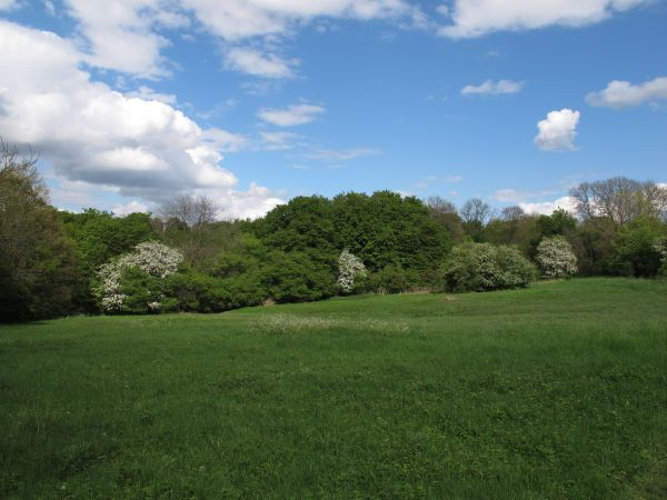View across the meadow